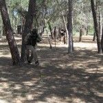 paintball (16)